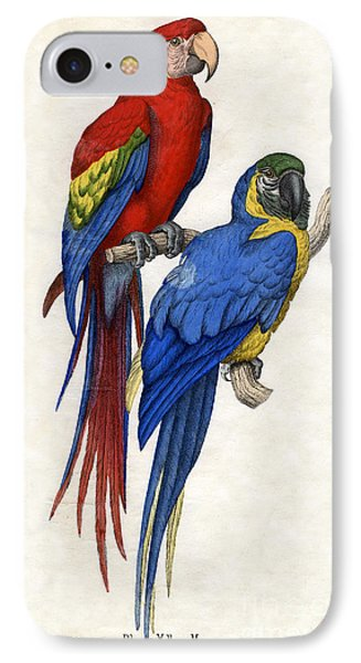 Aracangua And Blue And Yellow Macaw IPhone 7 Case