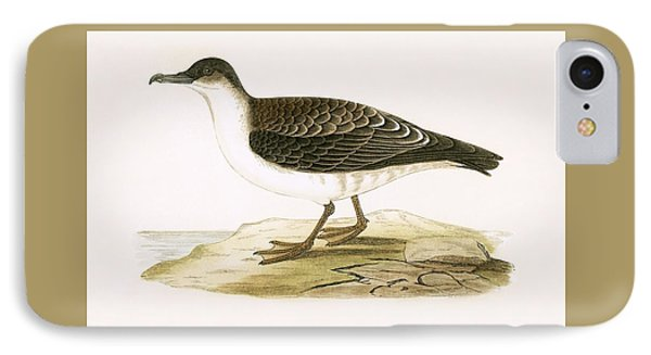 Arctic Cinereous Shearwater IPhone Case by English School