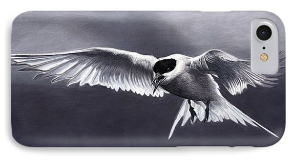 Arctic Tern IPhone Case