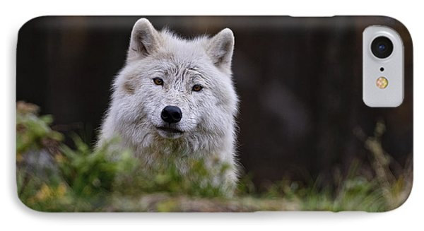 Arctic Wolf In Autumn IPhone Case by Michael Cummings