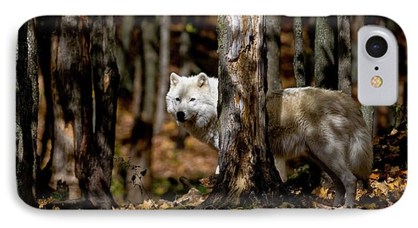 Arctic Wolf In Forest IPhone Case by Michael Cummings