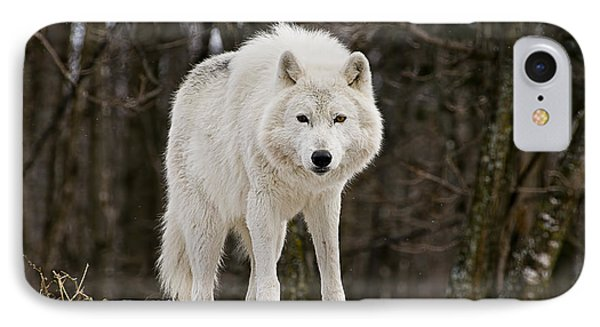 Arctic Wolf On Hill IPhone Case by Michael Cummings