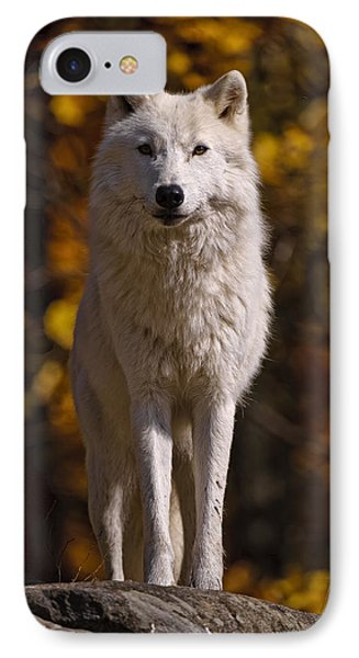 IPhone Case featuring the photograph Arctic Wolf On Rocks by Michael Cummings
