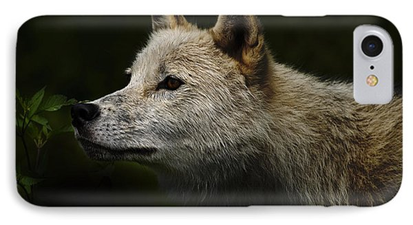 IPhone Case featuring the photograph Arctic Wolf Portrait by Michael Cummings