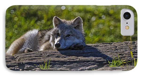 Arctic Wolf Pup 2 IPhone Case by Michael Cummings