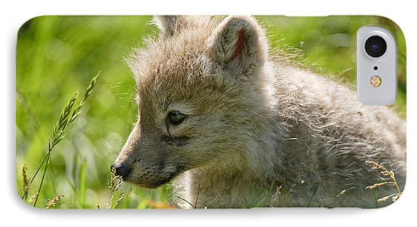 Arctic Wolf Pup In Grass IPhone Case by Michael Cummings