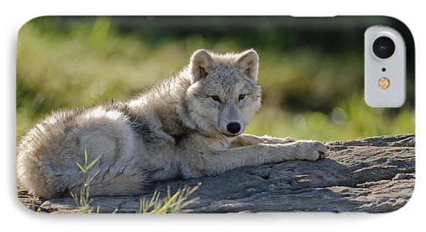 Arctic Wolf Pup IPhone Case by Michael Cummings