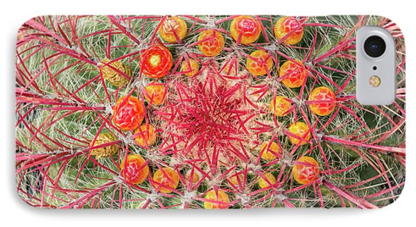 Arizona Barrel Cactus IPhone Case by Delphimages Photo Creations
