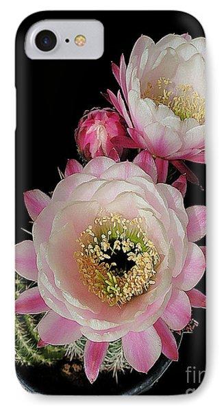 Arizona Desert Cactus Flowers IPhone Case by Merton Allen