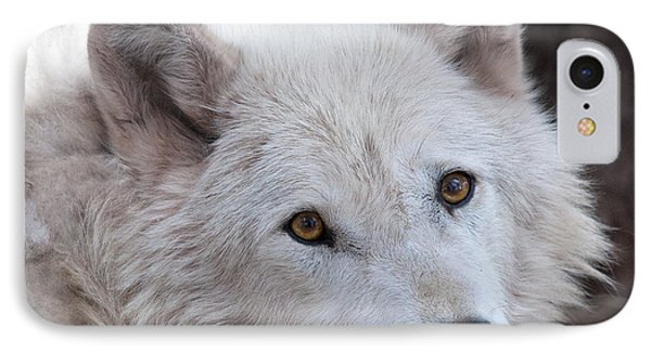 Artic Wolf IPhone Case by Laurinda Bowling