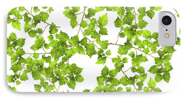 Hawthorn Pressed Leaf Art IPhone Case by Christina Rollo
