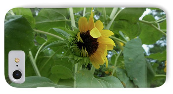 Sunflower Rising IPhone Case