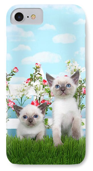 Kitten Siamese Sisters IPhone Case by Sheila Fitzgerald