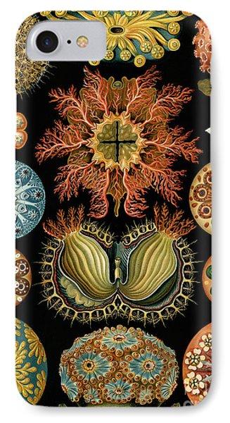 Ascidiae IPhone Case by Ernst Haeckel