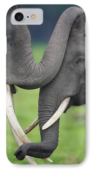 Asian Elephant Greeting Phone Case by Cyril Ruoso