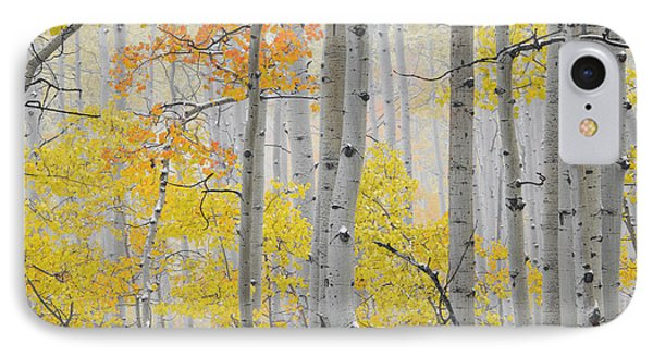 Aspen Forest Texture IPhone Case by Leland D Howard