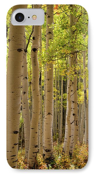 Aspen Grove IPhone Case by Dana Sohr