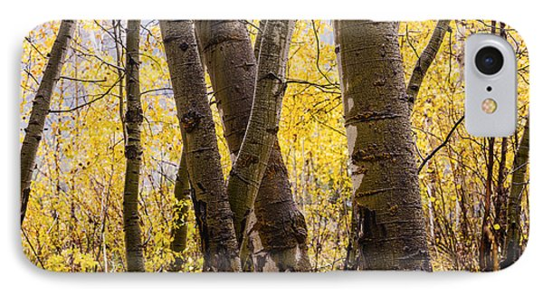 Aspen Grove In Autumn Rain IPhone Case by Vishwanath Bhat