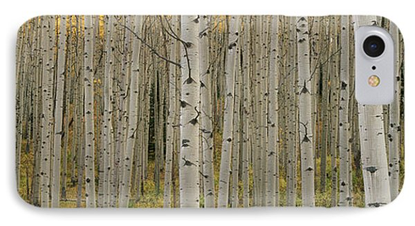 Aspen Grove In Fall, Kebler Pass IPhone Case by Ron Watts