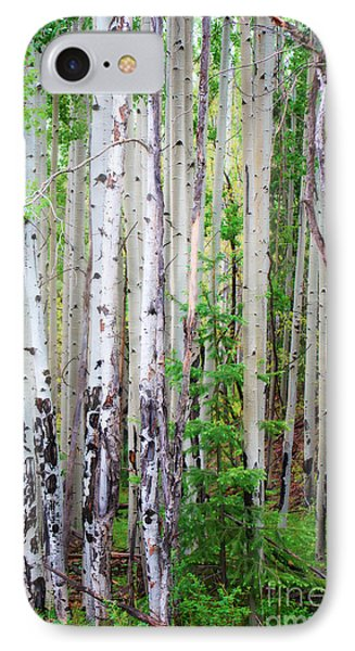 IPhone Case featuring the photograph Aspen Grove In The White Mountains by Donna Greene