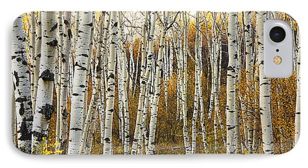 Aspen Tree Grove IPhone Case by Ron Dahlquist - Printscapes