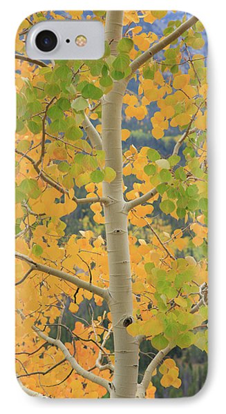 Aspen Watching You IPhone 7 Case by David Chandler