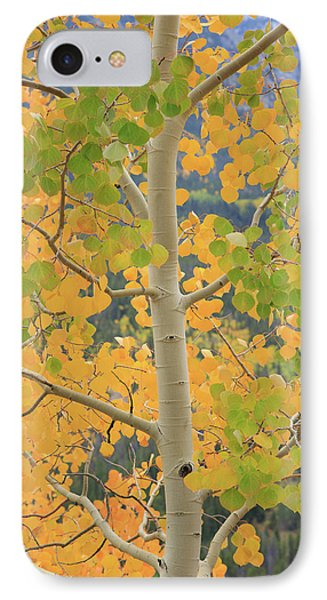 IPhone 7 Case featuring the photograph Aspen Watching You by David Chandler