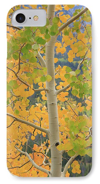 IPhone Case featuring the photograph Aspen Watching You by David Chandler