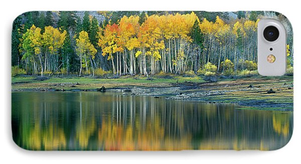 Aspens In Fall Color Along Lundy Lake Eastern Sierras California IPhone Case by Dave Welling