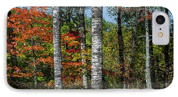 IPhone Case featuring the photograph Aspens In Fall Forest by Elena Elisseeva