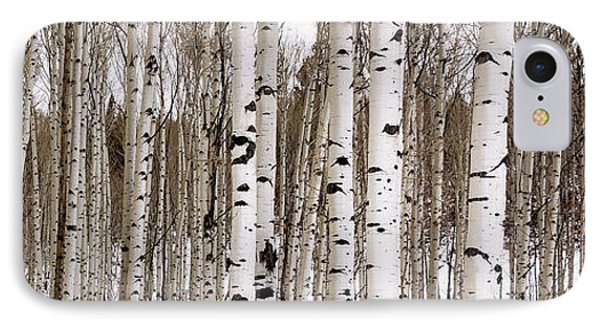 Aspens In Winter Panorama - Colorado IPhone Case