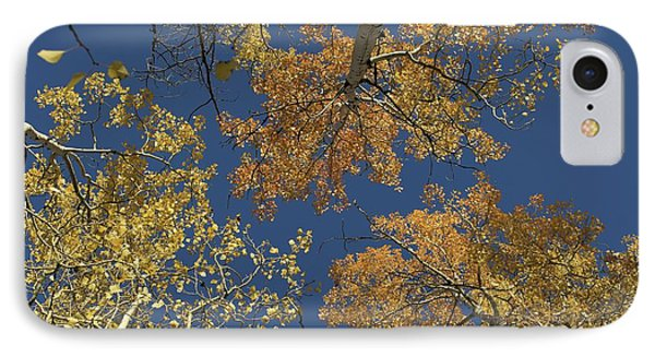 IPhone Case featuring the photograph Aspens Looking Up by Mary Hone