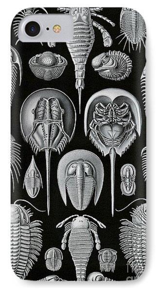 Aspidonia IPhone Case by Ernst Haeckel