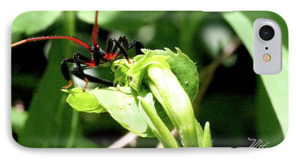 IPhone Case featuring the photograph Assassin Bug by Meta Gatschenberger