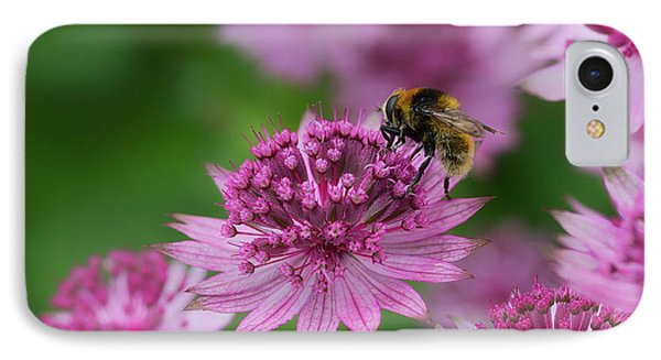 Pollination IPhone Case by Shirley Mitchell