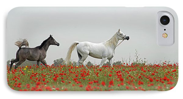 At The Poppies' Field... IPhone 7 Case by Dubi Roman