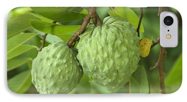 Atemoya Fruit IPhone Case by Inga Spence