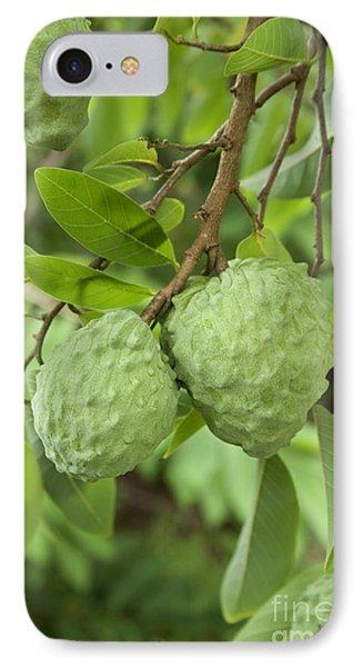 Atemoya Fruit On Branch IPhone Case by Inga Spence