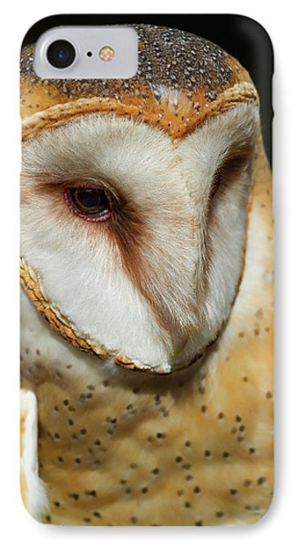 IPhone Case featuring the photograph Athena The Barn Owl by Arthur Dodd