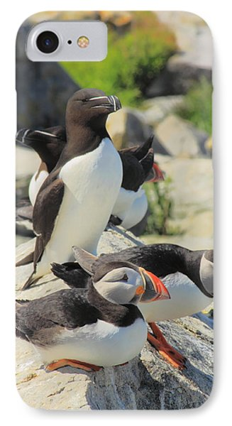 Atlantic Puffins And Razorbill IPhone 7 Case