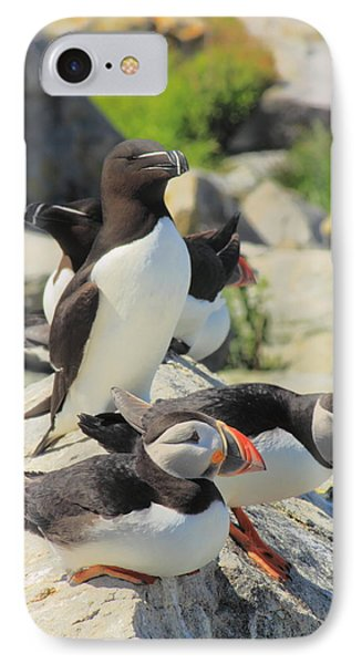 Atlantic Puffins And Razorbill IPhone 7 Case by John Burk