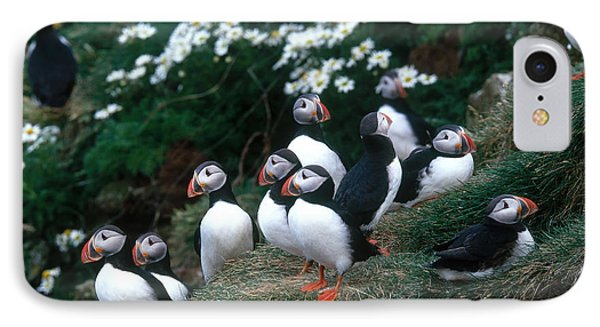 Atlantic Puffins IPhone Case by Art Wolfe