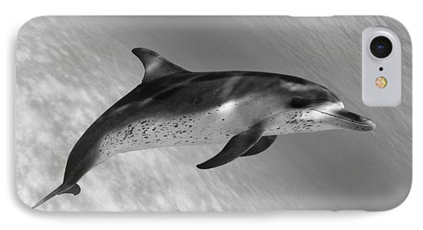 Atlantic Spotted Dolphin IPhone Case