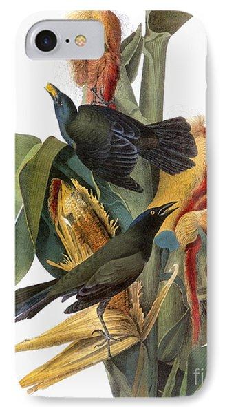 Audubon: Grackle IPhone Case