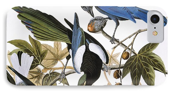 Audubon: Jay And Magpie Phone Case by Granger
