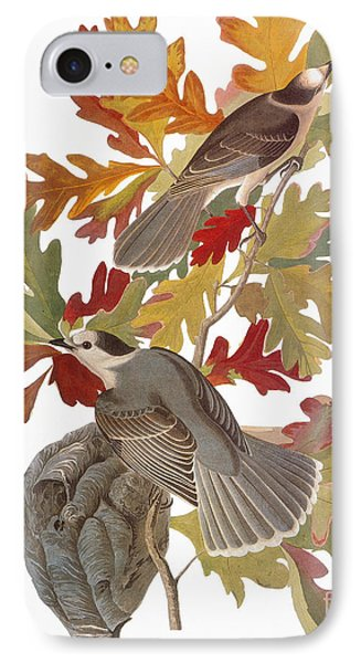 Audubon: Jay Phone Case by Granger