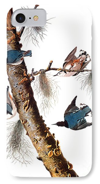 Audubon: Nuthatch Phone Case by Granger