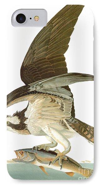 Audubon: Osprey IPhone 7 Case