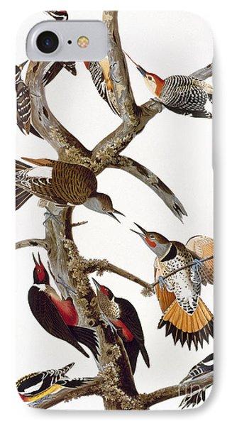 Audubon: Woodpeckers IPhone Case by Granger