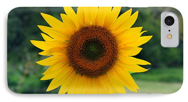 IPhone Case featuring the photograph August Sunflower by Jeff Severson